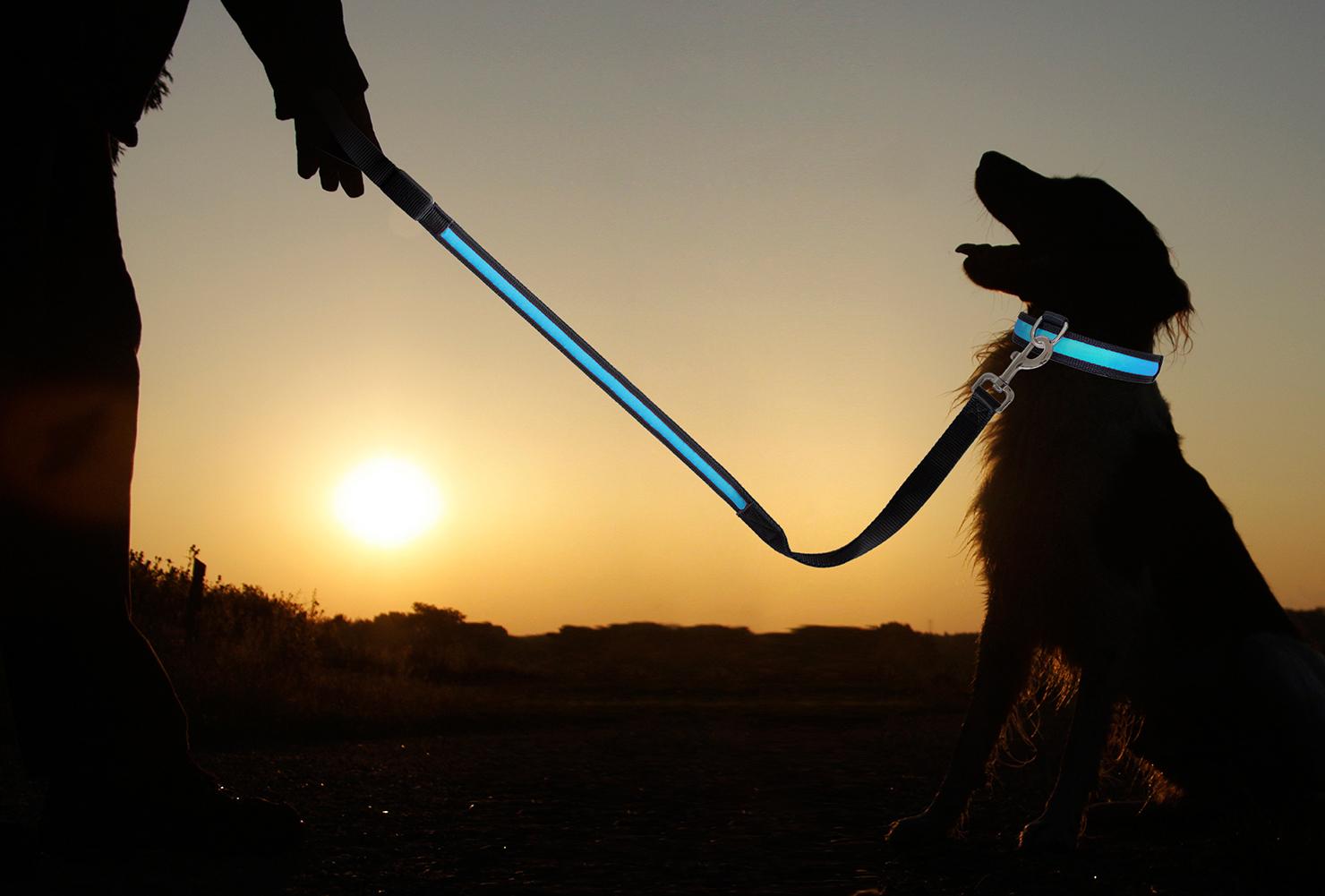 Led Halsband Led Hundehalsband Hundegeschirr Hunde Leine